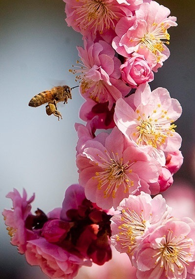 All about the bees (and love)